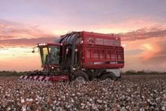 Cotton Picker For Sale 2014 Case IH 620